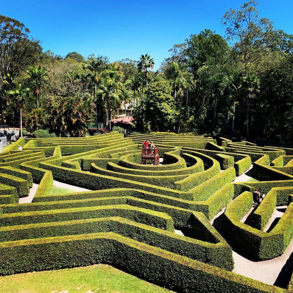 bellingham maze sunshine coast news