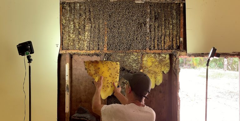Hive of activity: wild and wonderful world of the 'bee whisperer'