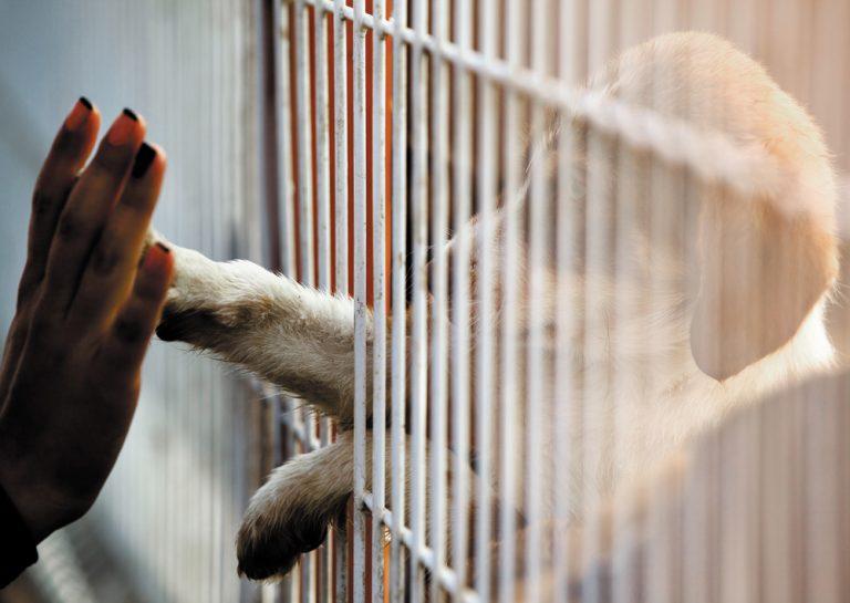 Spike in pet surrenders as rental market tightens