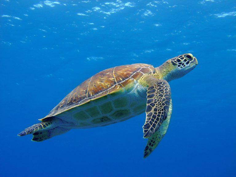 Wild and wonderful: team effort saves turtles