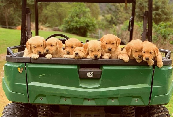 Councillors take 'moral stand' on puppy farm